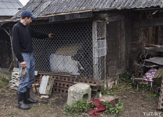 Репортаж из деревенского двора, где питбуль жестоко напал на беременную