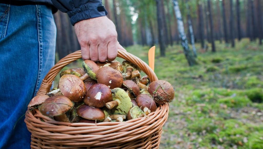 Четыре ребенка отравились грибами в Могилевской области