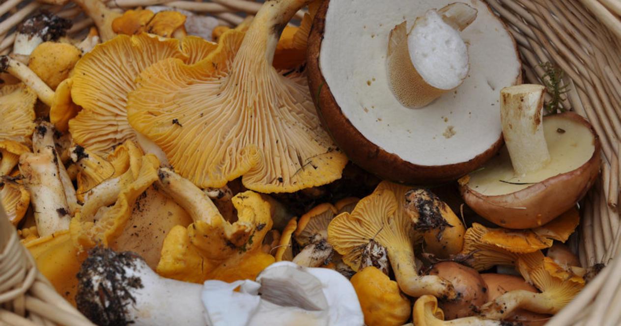 Как искать грибы: 10 народных примет