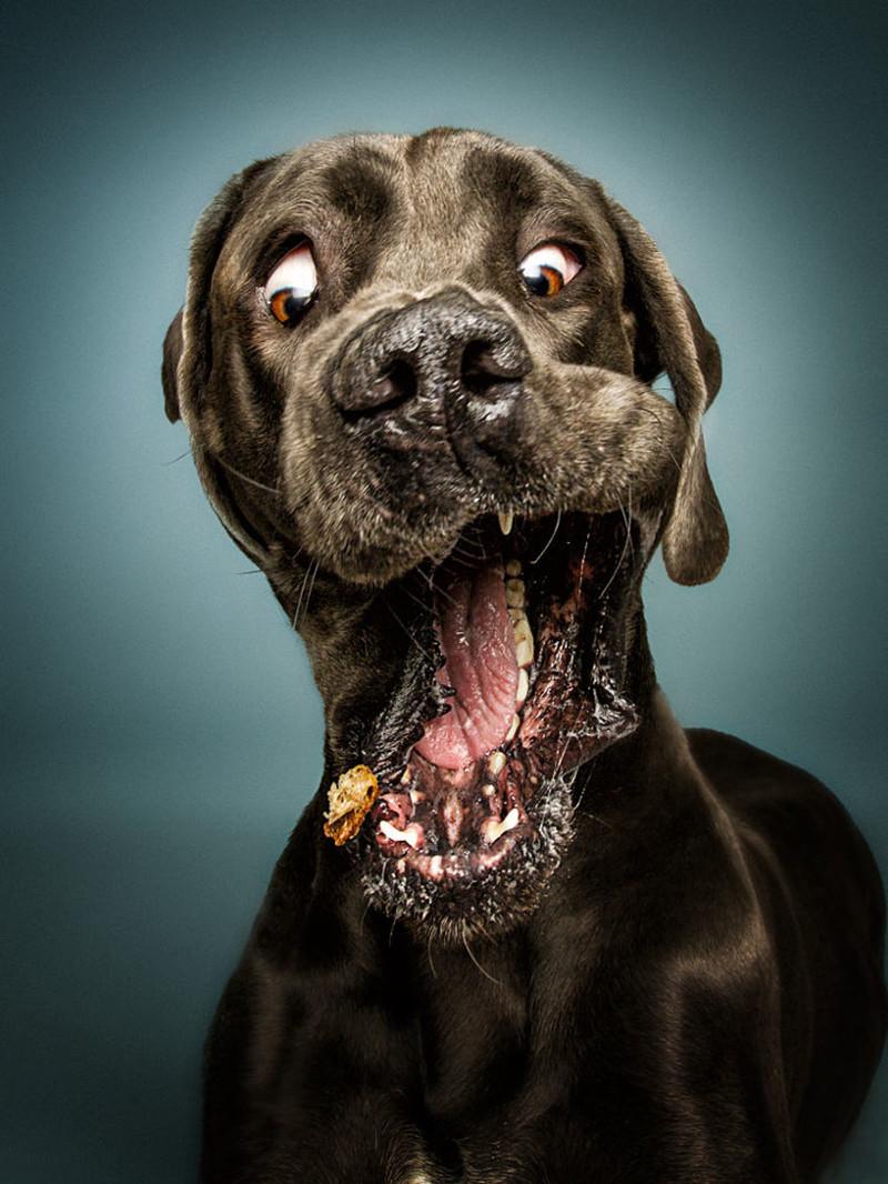 удивительно смешные выражения морд собак