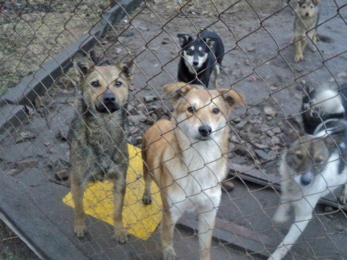 В Бобруйске остро стоит проблема бездомных собак