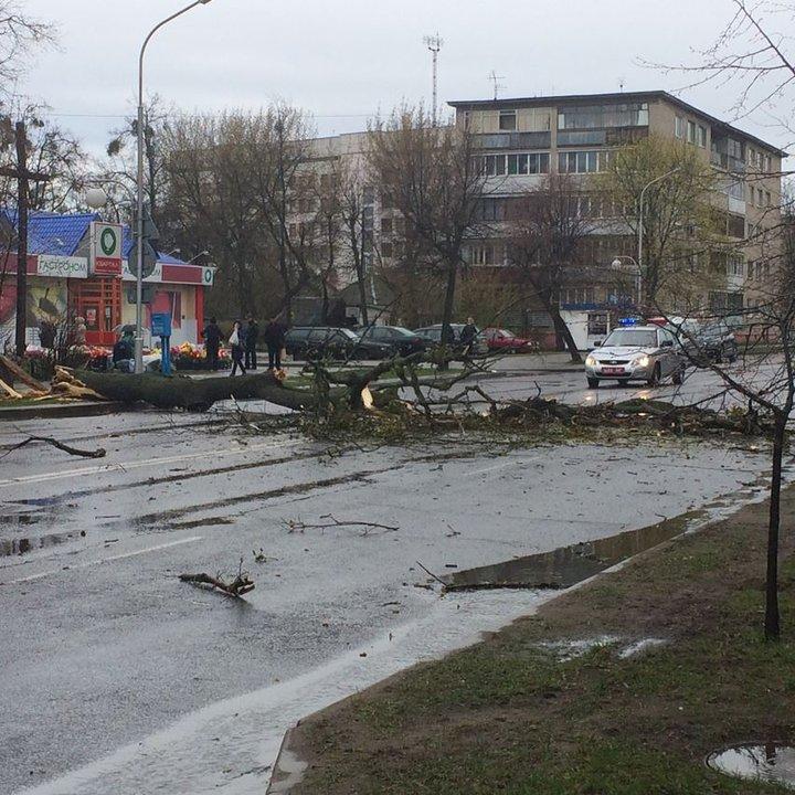 В Бобруйске из-за непогоды дерево рухнуло на проезжую часть