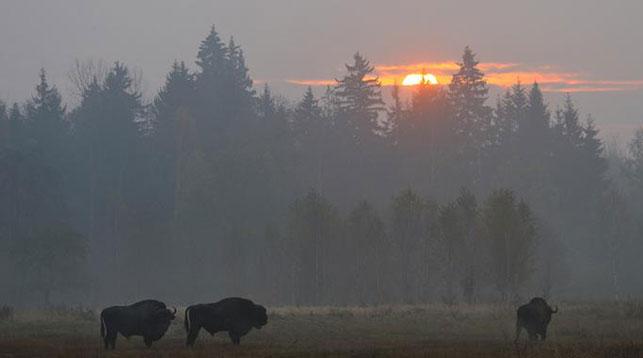 Беловежская пуща вошла в топ самых красивых парков Европы