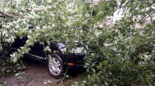 МЧС сообщает о случаях падения деревьев из-за сильного дождя в Минске