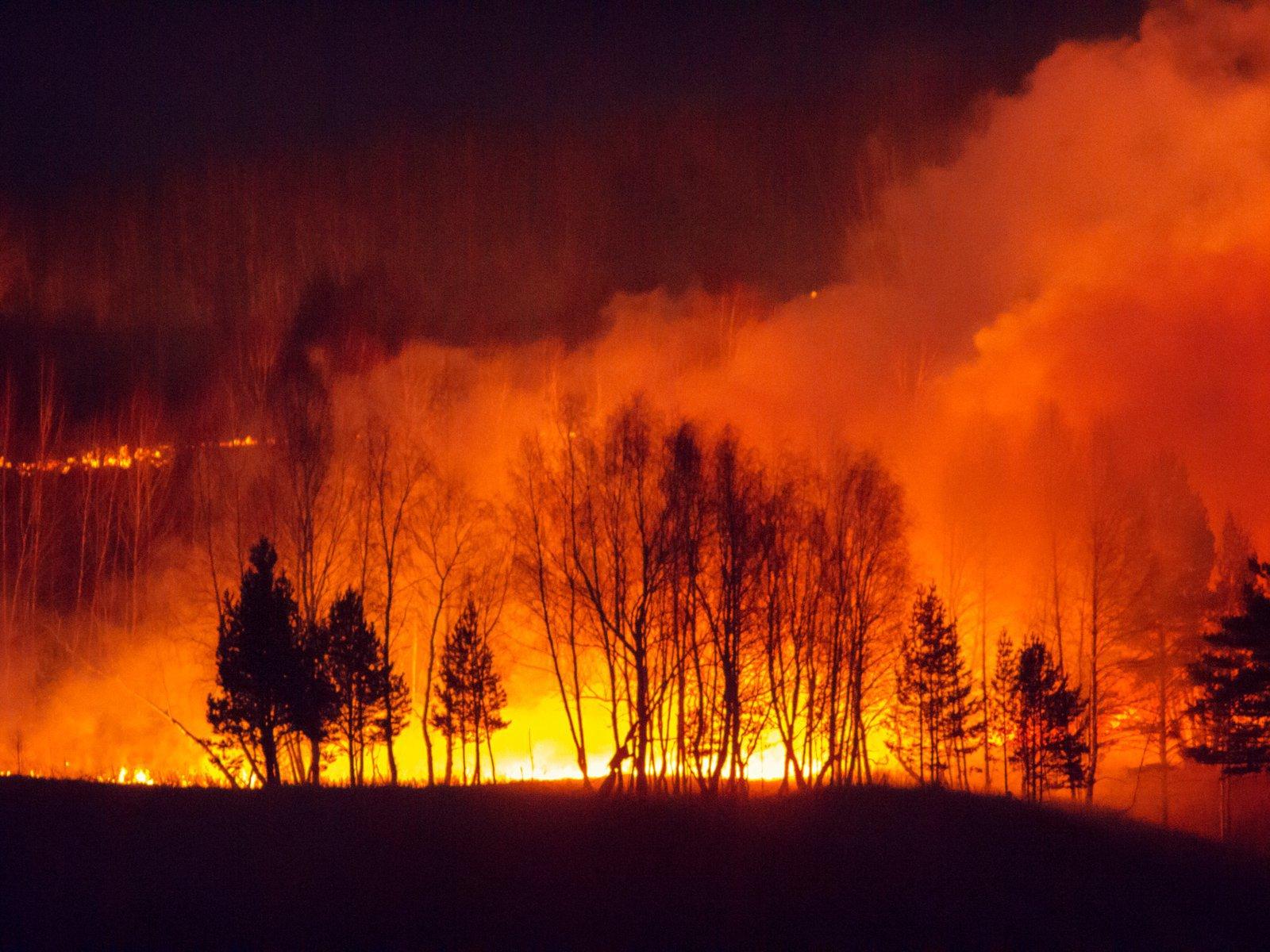 Пожары уничтожили три миллиона гектаров леса: что происходит в Сибири