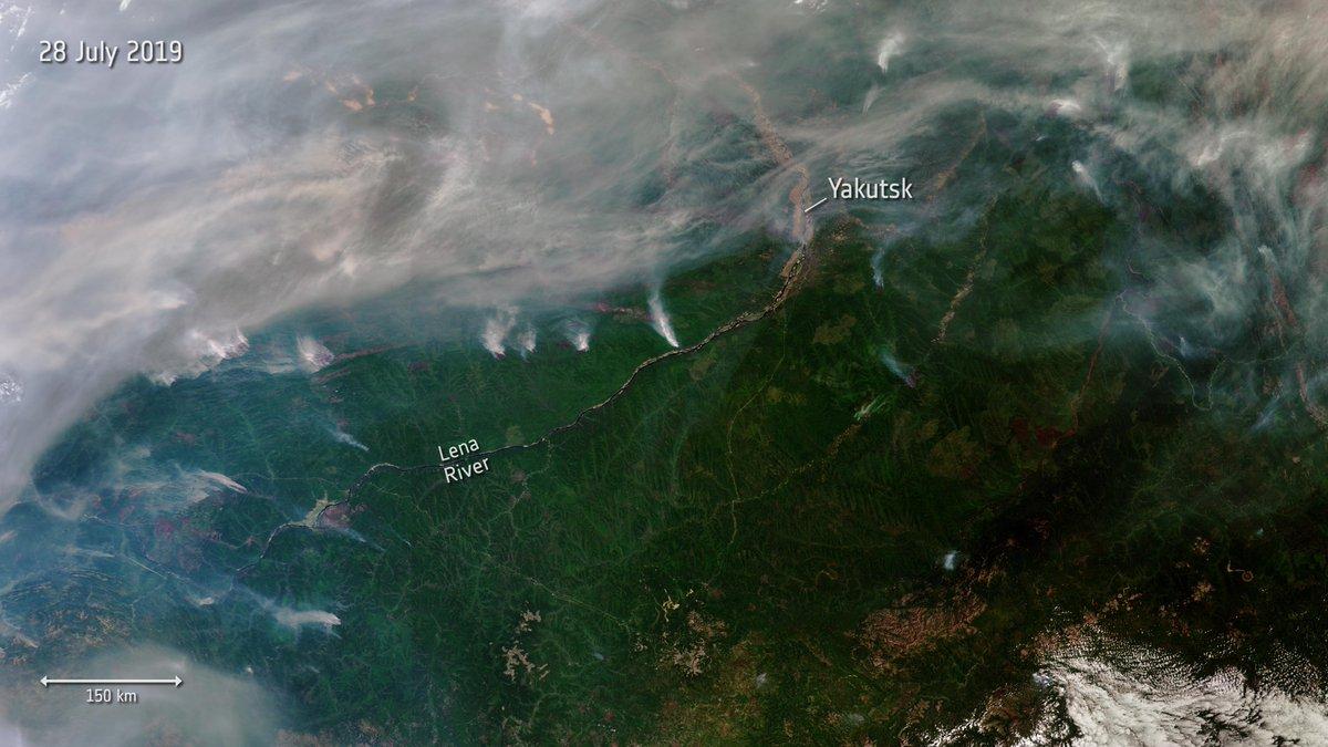 Дым от неконтролируемых лесных пожаров в Сибири дошел до Монголии. Вскоре он может накрыть и Москву